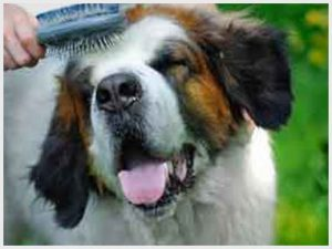 equipment for pet grooming