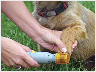 clipping the nails of a dog in the garden