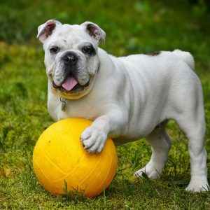 dog grooming Houston