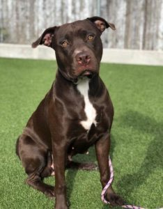 dog emotions and dog grooming