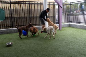 Training giving obedience training for dogs