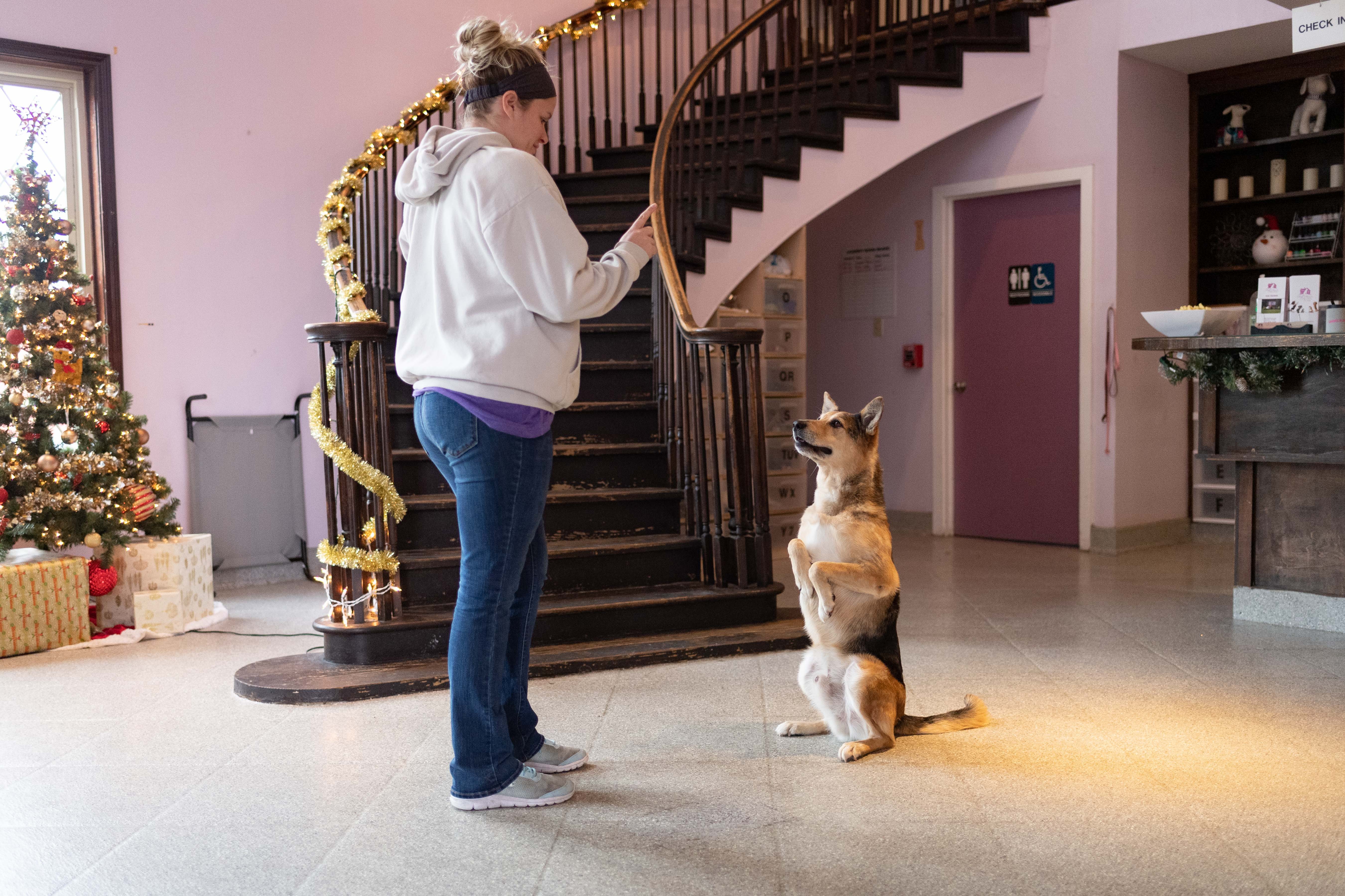 a trainer giving commands to a dog