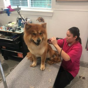 Pet grooming Houston experts working on a dog