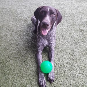 A dog sitting with a ball