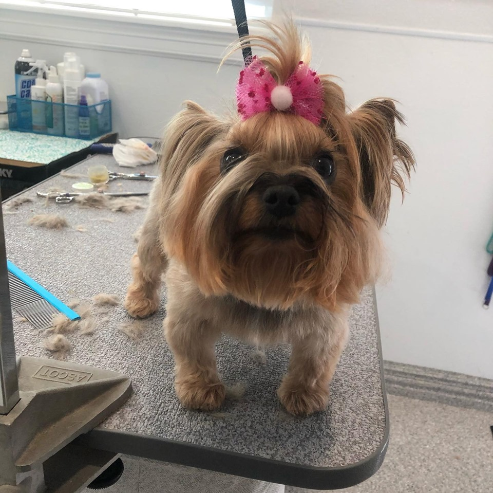 A cute pup on a grooming table