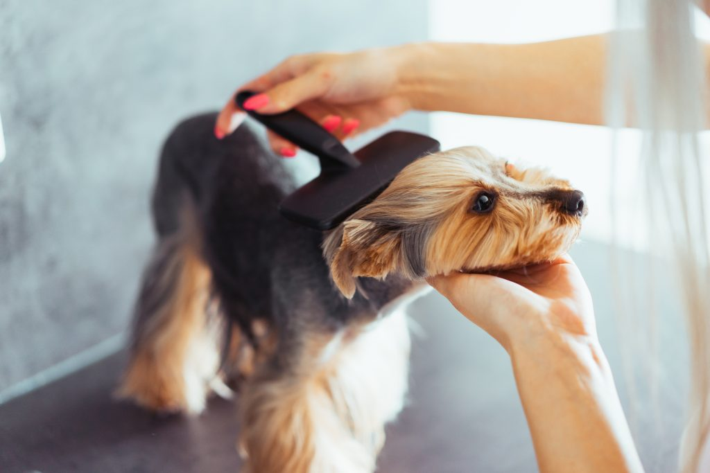 Dog Grooming in Houston