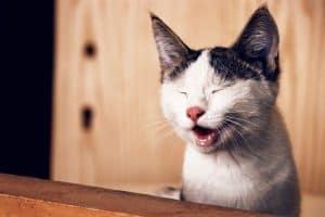 cat groomer houston