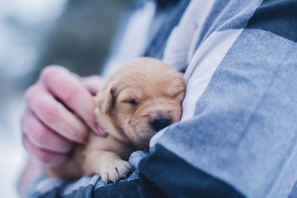 Benefits of using My Pet Credentials