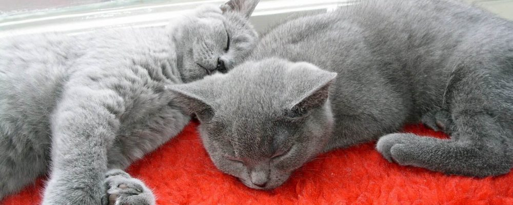 cat-2-1367749